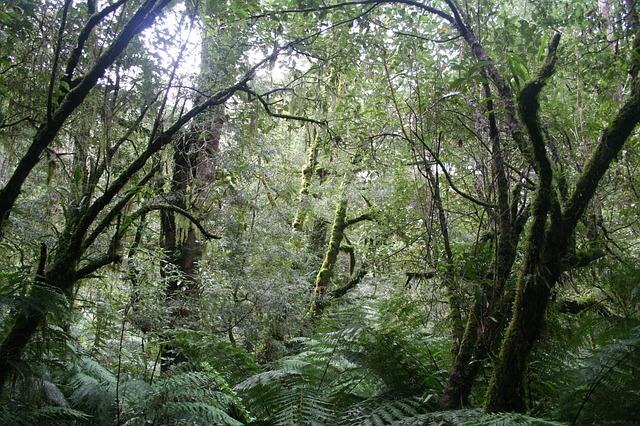 mails beheren - tropisch regenwoud